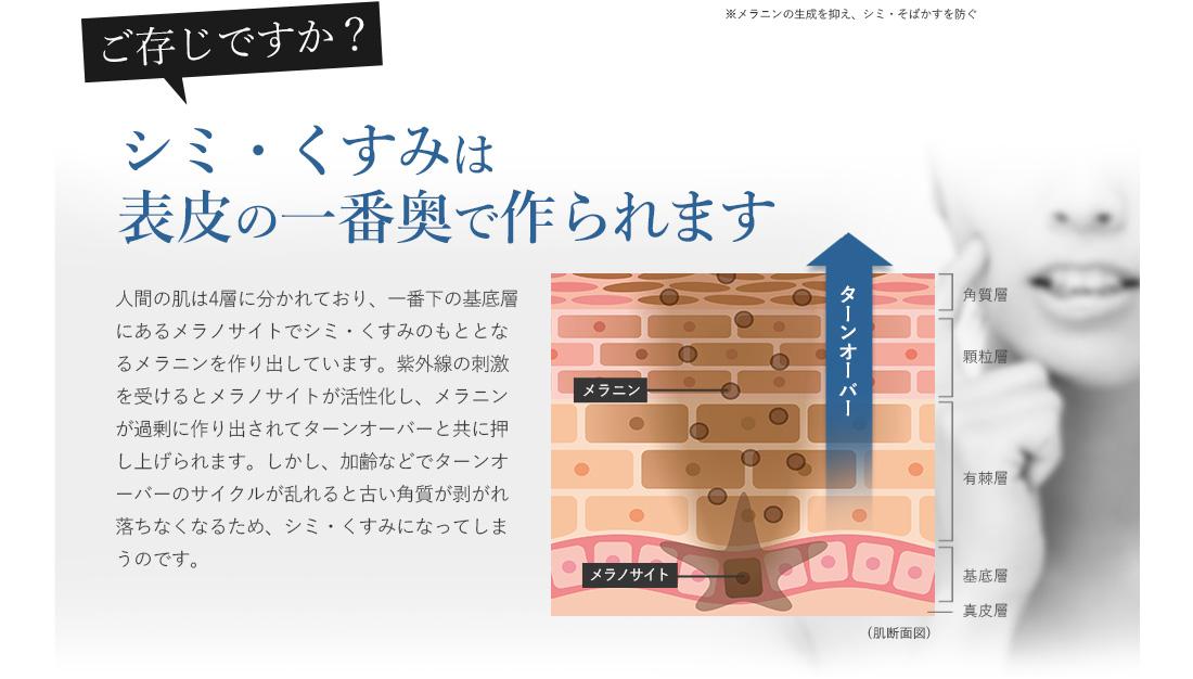 シミ・くすみは表皮の一番奥で作られます